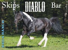 SKIPS DIABLO BAR